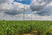 Windmills  on corn field. — Stock Photo