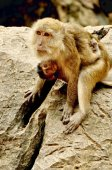 Mother and child Monkey — Stock Photo
