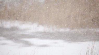 Snowing winter CU — Stock Video