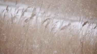 Snowing winter — Stock Video