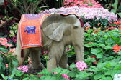 Elefanti e fiori — Foto Stock