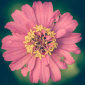 Vintage Pink Flowers — Stock Photo