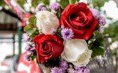 Closeup of a beautiful roses — Stock Photo