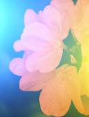 Vivid colors beautiful floral in soft style. — Stock Photo