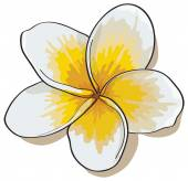 Tropical flowers plumeria isolated on white background.Vectors — Stock Vector
