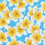 Tropical flowers plumeria — Stock Vector #75894821