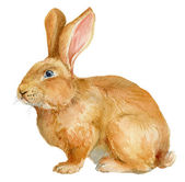 Brown rabbit. Watercolor illustration. — Stock Photo