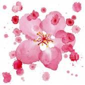 Apple Blossom. Watercolor vector illustration. — Stock Vector