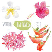 Thai flowers. Vector watercolor illustration. — Stock Vector