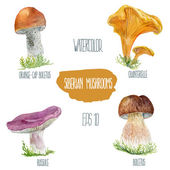 Siberian mushrooms. Vector watercolor illustration. — Stock Vector