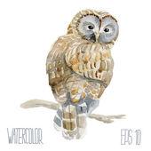 Ural owl. Vector Watercolor illustration. — Stock Vector