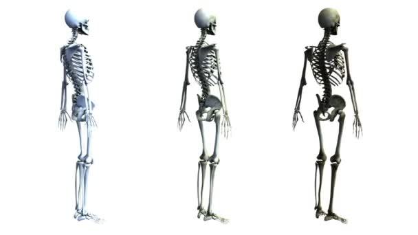 Esqueleto — Vídeo de stock