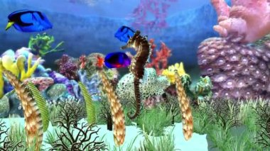 Akvárium — Stock video
