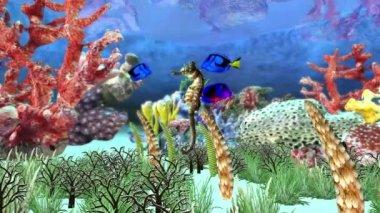 Akwarium — Wideo stockowe