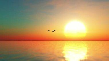 Migratory birds — Stock Video