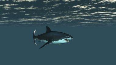 Shark — Stock Video