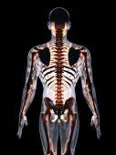 人間の体 — ストック写真