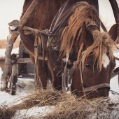 Close-up of horse in harness — Stock Photo