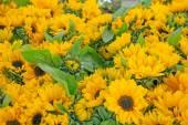 Желтые цветы фон — Стоковое фото