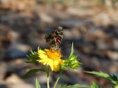 黄色い花の上に座って美しい蝶 — ストック写真