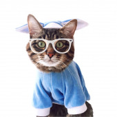 Cat in clothes and glasses — Stock Photo