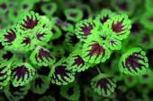 Yakın çekim yeşil bitki — Stok fotoğraf
