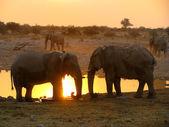 Słonie Etosha National park — Zdjęcie stockowe