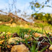 Morning dew in the forest with a low angle — Stock Photo