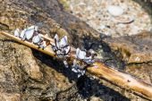 Colonia clams living on a wooden stick — Stock Photo