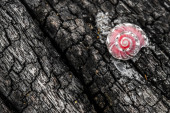 Pink shell on wooden background — Stock Photo