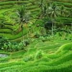 pirinç terasları — Stok fotoğraf #67729229