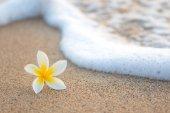 Plumeria on Beach — Stock Photo