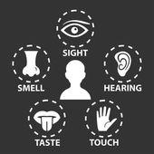 Five senses icon set — Stock Vector