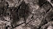 Wooden circle — Stock Photo