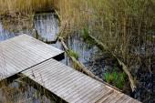 Abandoned sunken overgrown rowboats — Stock Photo