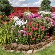 Multicolored flowerbed flowering phlox on a sunny day — Stock Photo #67920879