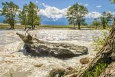 Kurai steppe — Stock Photo