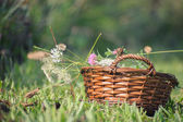 Closeup of wicker basket in a field filled with wildflowers — Stock Photo