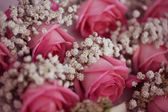 Gypsophilla and pink roses — Stock Photo