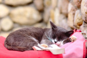 Cat sleeping on bag — Stock Photo