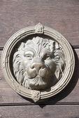 Lion head — Stock Photo