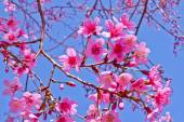 Colourful flower under the blue sky — Stock Photo