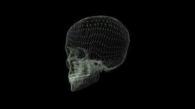 Skull Wireframe — Stock Video