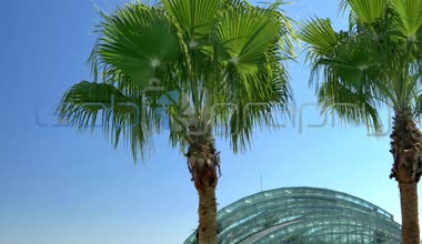 Channelside palm trees and glass building — Stock Video