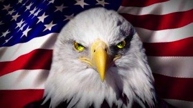 American Flag Eagle Eyes — Stock Video