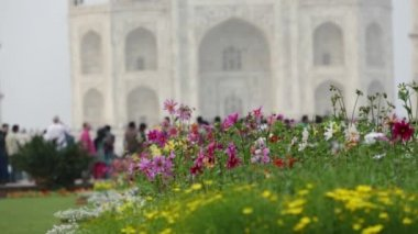 Flowers in lawn on the background of out of focus Taj mahal at Agra A UNESCO World Heritage Site. — Стоковое видео