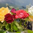 Bouquet of roses of various colors — Stock Photo #72576289