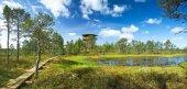 Panoramic view to Viru bogs — Stock Photo