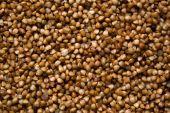 Зерно гречихи — Стоковое фото