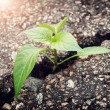 Plant growing from crack in asphalt — Stock Photo #72106659